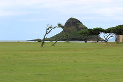 IMG_1840 (cheryl's pix) Tags: hawaii oahu kaneohe chinamanshat mokolii mokoliiisland kualoaregionalpark mokolii kneohe kaneohehi mokoliiisland kneohehi