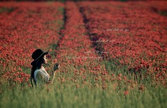 So plant the thought (Hungmn) Tags: flowers flower field countryside farm poppy poppies poppyfield poppiesfield