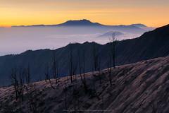 Layers of  Nature (Noom HH) Tags: sunset sky tree nature sunrise indonesia landscape volcano asia desert deadtree barren arid bromo