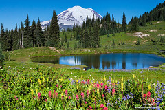 Mount Rainier and Flowers (Don Geyer) Tags: morning wild summer usa mountain lake mountains water ecology horizontal landscape outside outdoors landscapes us washington pond flora scenery unitedstates natural outdoor lakes scenic meadow meadows peak foliage mountrainier mountrainiernationalpark wa backcountry environment mornings summertime wilderness peaks ponds paintbrush lupine scenics summers ecosystem cascaderange environments wilds summertimes lousewort horizontals ecosystems uncultivated mountrainieraboveatarnandpinkheatheralongthenachespea mountrainieraboveatarnandpinkheatheralongthenachespeaktrail