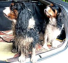 3 afbeeldingen voor u (fransje2009) Tags: prima third44dearphotosflickrcom