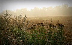 Misty morning (april-mo) Tags: mist france field misty fog countryside foggy nord champ brume franceimage countrylife somain