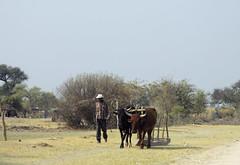 Vervoer langs de D3402 (Roelie Wilms) Tags: namibia okavango rundu namibi elementsorganizer
