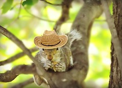 ~Charlie says sometimes you gotta grab that disguise and hide out with your nuts..~ (nushuz) Tags: hat nuts charlie disguise totalcuteness whimsical justforfun graysquirrel treeinmyyard lifegetsboring squirrelswithhats