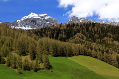 der letzte Schnee (mikiitaly) Tags: italy wiese berge grn wald sdtirol altoadige wipptal frhjahr pfitschtal