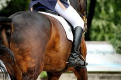 IMG_0513 (dreiwn) Tags: horse pony pferde pferd equestrian horseback reiten horseriding dressage hnger 2015 reitturnier dressur pferdekopf dressuur junioren ridingarena pferdesport doublebridle reitplatz reitverein pferdehnger kandare turnierreiten dressurprfung ldressur