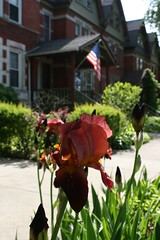 Ain't That America [Explored 5/24/2015] (Flint Foto Factory) Tags: city iris urban chicago flower john illinois spring memorial flickr day weekend flag south side may saturday historic neighborhood explore american pullman cougar pinkhouses gingersnap 2015 mellencamp aintthatamerica explored stlawrenceave e112thst