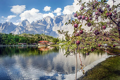 Apples in Shang-re-la resort Skardu Pakistan (saleem shahid) Tags: