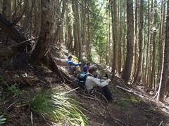 Nice Trail!