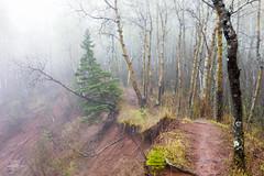 Morning's Mood (Boreal Bird) Tags: trees mist green fog spring woods gloom borealforest