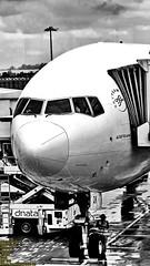 Wet preparation.. (Ferry Octavian) Tags: canon powershot sx50 sx50hs canonpowershotsx50hs singapore portrait canonpowershot camera bridge trip journey holiday boeing b777 b777300 b777300er b77w b773 b773er widebody nose noseshot terminal1 ride myride tarmac gate apron runway terminal airportterminal bw blackandwhite monochrome grey greyscale plane airplane planespot planespotting planespotter spotter aircraft jet jetliner airline airliner transport transportation flyingmachine machine aviation changi changiairport changiinternationalairport sin wsss cactus garden cactusgarden airport horizon skyline cloud fgsqk air france airfrance af af254 cgk sincgk mighty777 tripleseven