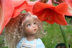 Alice by Ashton Drake (tamsykens1) Tags: glass ball doll looking alice dianna through drake ashton wonderland jointed effner