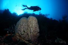 Barrel (Randi Ang) Tags: park bali coral canon indonesia island photography eos marine underwater angle barrel wide dive scuba diving national ang sponge randi 6d menjangan