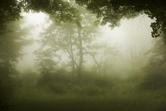 fairy fog (irina_escoffery) Tags: