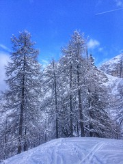 Snow Winter Cold Temperature Blue Tree Tranquil Scene Scenics Nature Beauty In Nature Sky Tranquility No People Outdoors Forest Frozen Day Landscape Mountain Snowing Skiing 2016 at Axamer Lizum (Photography C A) Tags: snow winter coldtemperature blue tree tranquilscene scenics nature beautyinnature sky tranquility nopeople outdoors forest frozen day landscape mountain snowing skiing 2016