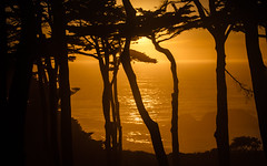 Sunset at Lands End (San Francisco Gal) Tags: landsend ggnra sunset silhouette montereycypress cypress tree glowing sanfrancisco ngc
