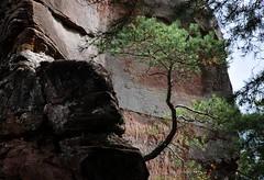 20161003-022F (m-klueber.de) Tags: 20161003022f 20161003 2016 mkbildkatalog pfalz pflzer wald wasgau pflzerwald dahn dahner felsenland lmmerfelsen sandstein