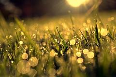 limitless heart (joy.jordan) Tags: grass dew frost autumn light sunrise bokeh texture thismorning