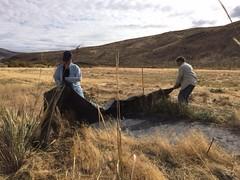 IMG_1422 (Oregon Natural Desert Association) Tags: denny jones ranch weed mat removal 2016 stewardship trips