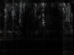 21306 (steric) Tags: forest foreste alberi dark darkforest blackforest blacktrees
