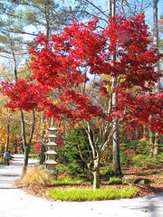 another view at Gibbs Gardens (Vicki's Nature) Tags: trees red leaves statue path walkway fall autumn gibbsgardens georgia november vickisnature canon s5 2730 landscape