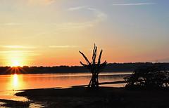 DrowningRefugee01 (PuraVida Photo) Tags: potomacriver washingtondc installationsculpture art driftwood foundart refugee alexandria virginia dawn sunrise