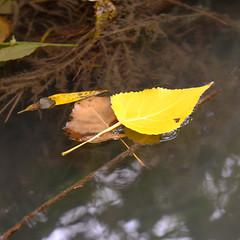 Au fil de l eau (Chander-17) Tags: larochelle aquitainelimousinpoitoucharen france aquitainelimousinpoitoucharentes fr