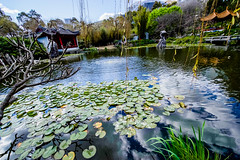 DSC01395 (Damir Govorcin Photography) Tags: culture water trees chinese gardens sydney sony a7ii zeiss 1635mm nature natural light sky lilypads landscape darling harbour perspective creative