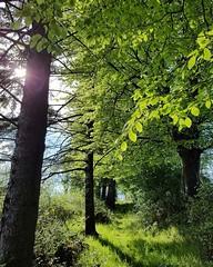 Woodsy wonderland (J O E M A T I O N) Tags: hdr flickr ireland nature forest flare