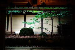 Afternoon Somewhere (sunnywinds*) Tags:        kyoto green momiji maple japanesemaple stone rock leica summilux contrast  foliage