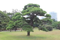 Hama Rikyu Garten