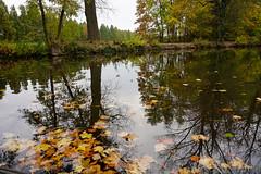 Herbst Spiegelung ... Autumn Reflections