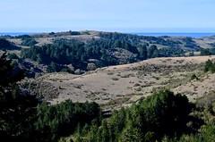 Ano Nuevo, ocean, Butano State Park, Goat Hill trails, Little Butano Creek, redwoods (David McSpadden) Tags: anonuevo butanostatepark goathilltrails littlebutanocreek ocean redwoods