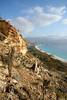 Bottletree on Shu'ub Cliffs (indomitablemachine) Tags: shouab shu'ub bottletree coast socotra yemen hadhramautgovernorate ye