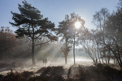 Winter wonderland (MMcStudio) Tags: sunrise frosty mist winterwonderland