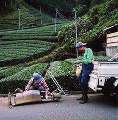 Green Tea Farmers (Tonx-) Tags: green tea shizuoka portra kodak japan hasselblad