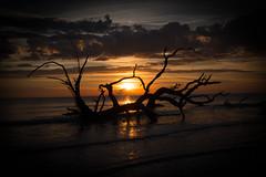Jeckyll Island Sunrise (Mark Wingfield) Tags: beach driftwood sunrise sun boneyard georgia jeckyll island outdoors outside nikon d750 2470 28 handheld atlantic ocean wood tree clouds sky orange water beautiful nature pretty