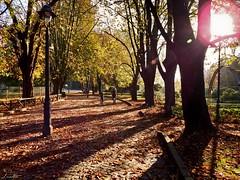 Paseos por el parque (Jaime Martin Fotografia) Tags: asturias gijon parque otoo autumn