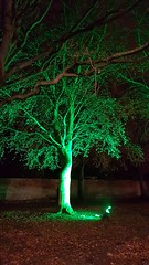Trees ARE Green (Andy Martin 267) Tags: tree lincoln xmasmarket lincolnshire greentree
