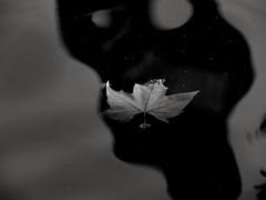 La dernire danse... The last dance.... (alainpere407) Tags: alainpere paris candidpictureinparis parisinsolite parisnoiretblanc parisblackandwhite feuillemorte feuille leaf deadleaf automne autumn fall