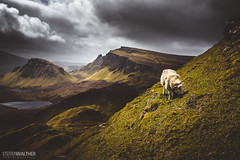Trotternish sheep (Steffen Walther) Tags: 2016 reise schottland canon5dmarkiii canon1740l reisefotolust outdoors highlands skye britain uk scotland trotternish quiraing travel landscape mountains hills ridge sheep animal meadow steep lake north clouds contrast sun light hebrides