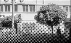 20161121-121 (sulamith.sallmann) Tags: pflanzen attika baum busfahrt bw greece griechenland homme male man mann mnnlich plants schwarzweis sw tree unscharf grc sulamithsallmann