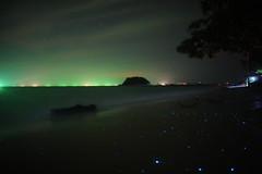 Bioluminescent Plankton (PerkyBeans) Tags: blue light nature night thailand amazing glow bioluminescent plankton bioluminesence