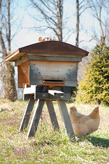 _DSC0053 (visionsrecalled) Tags: chickens sunshine virginia flying day bees honey blueskies honeybees buzzing swarms