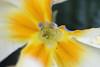 Natures Unnoticed (RebBakerPhotography) Tags: flower macro yellow petal hiddenworld