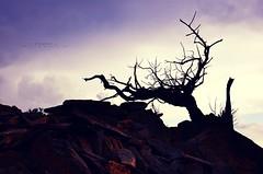 نَصمتْ لِـ تَسيـر حَياتُنا عَلى' مـآ يُرـآمْ ، (khlọọd ặlkhặldi   خلود الخالدي) Tags: nikon d90 جبال الطائف خلود الشفا الخالدي khlood الفوتوغرافيه alkhaldi المصوره