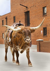 Steer Town (Ziggy Lives) Tags: brown building brick texas tx horns strong longhorn fortworth saddle stockyards