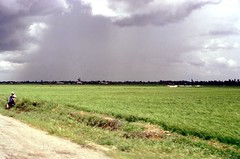 Rice and Rain (Gene Whitmer) Tags: 1972 ricefields tingiang dinhtuongprovince