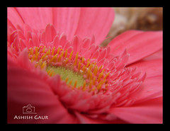 slide-1 (Ashish Gaur - www.ashishgaur.com) Tags: camera pink blue red orange india white flower green slr rose yellow butterfly insect photography photographer lily lotus bee uttaranchal click dslr honeybee ashish dehradun gaur uttarakhand kanwali