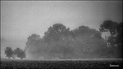 Treeline (Photography from the soul) Tags: blackandwhite mist landscape creativity edinburgh earlymorning grainy filmstyle